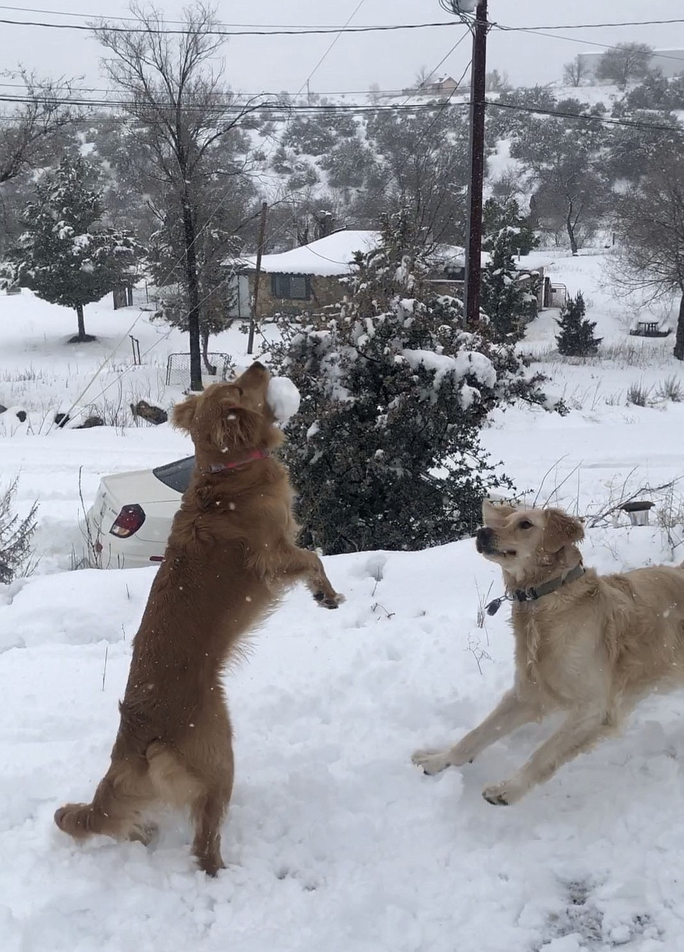 Daisy (jumping for the snowball) and her big brother Gatsby having fun in the snow.