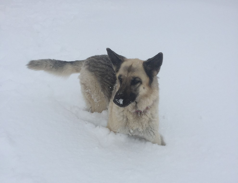 Dixie playing in the Chino Valley snow