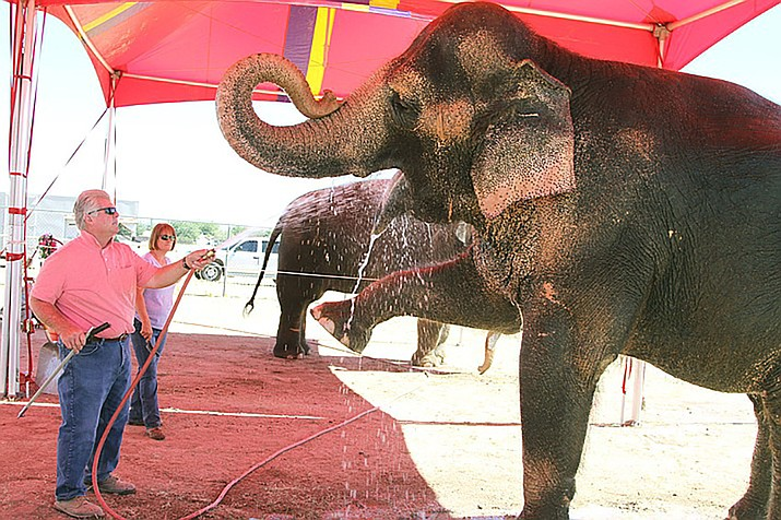 Gary Johnson and Joanne Smith give Tai the elephant a bath at the Mohave County fairgrounds. City Council will revisit exotic animal usage in circuses at its March 5 meeting. (Daily Miner file photo)