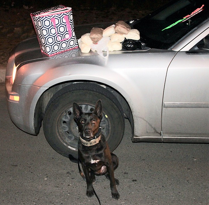 "Yavapai County Sheriff's K9 ""Vader"" poses before the hundreds of fentanyl pills and 10 one-pound packages of methamphetamine the dog and its partner seized during a traffic stop Wednesday, Feb. 27, 2019, on Interstate 17 near Cordes Lakes. (YCSO/Courtesy)"