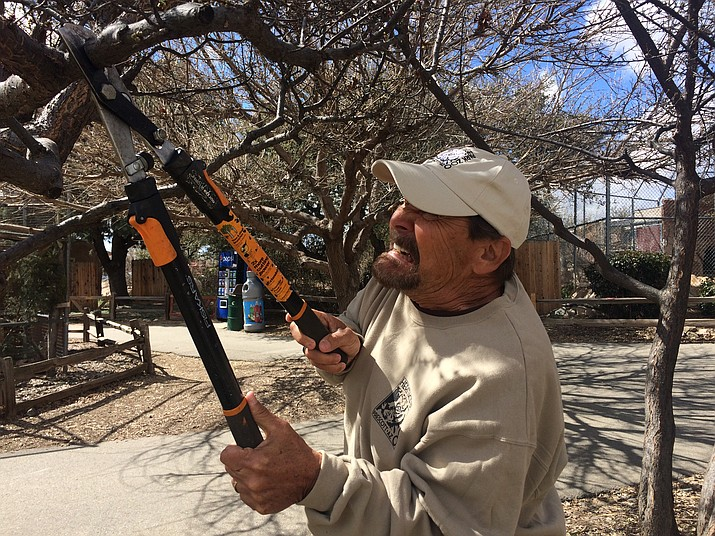 Western News and Info Events and Marketing Director Lew Rees helps with upkeep by trimming trees Thursday, March 7, 2019, at Heritage Park Zoological Sanctuary in Prescott. (Jason Wheeler/Courier)