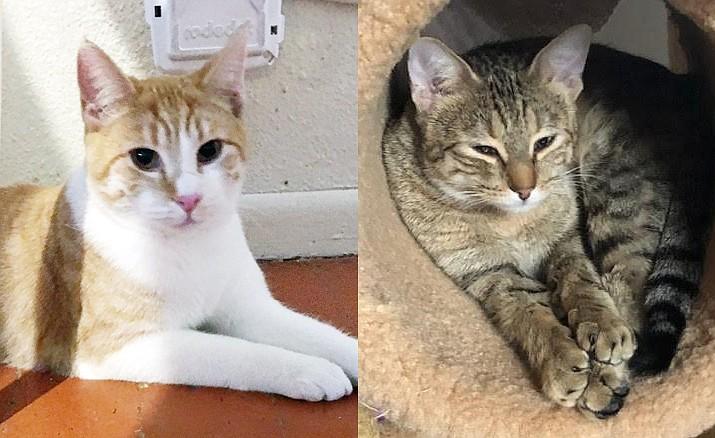 Noelle & Sam — Catty Shack