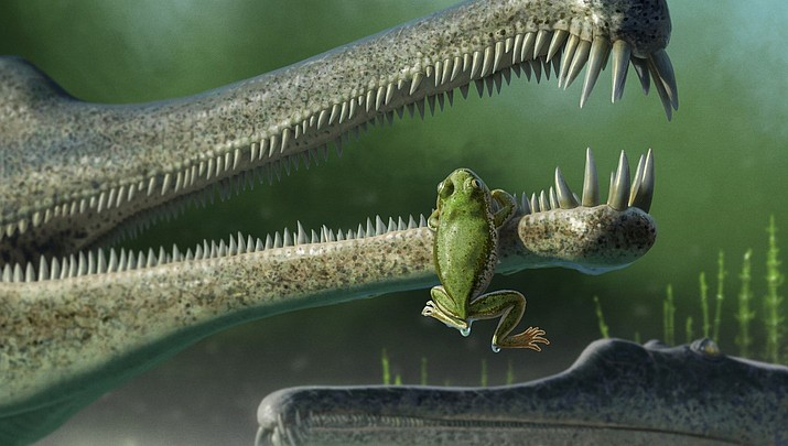 Earliest equatorial frogs reported from Triassic rocks at Petrified Forest National Park