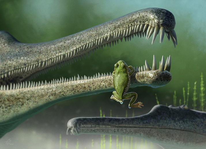 A Triassic frog clings to the snout of a phytosaur. (Artist rendering/Andrey Atuchin courtesy of NPS)