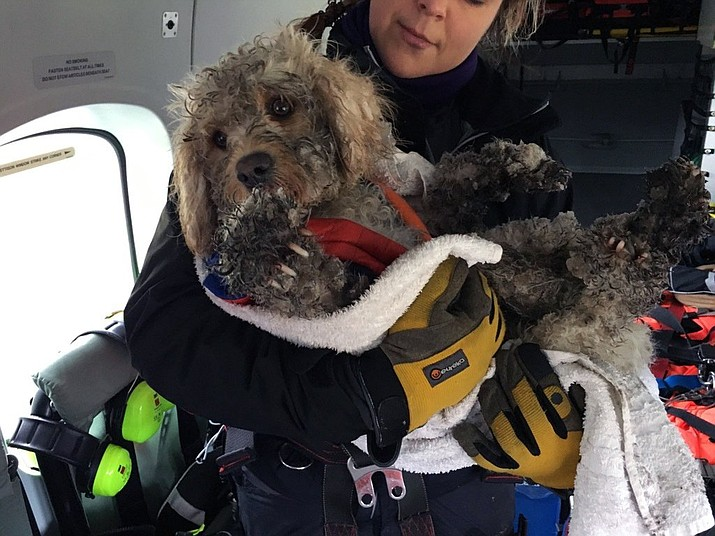 Coastguard helicopter winchman Kate Willoughby holds Ben the dog after he was rescued in the Cairngorms in Inverness, Scotland, Wednesday, March 13, 2019. It was a routine winter training mission in northeast Scotland until the Maritime and Coastguard Agency spotted a stranded dog on the snowy Cairngorms mountains below. They couldn't fly away and leave the dog in trouble, so winchman Mark Stevens on Wednesday was lowered to the ground, scooped up the cold and frightened animal, and raised back to the helicopter. (Maritime & Coastguard Agency via AP)