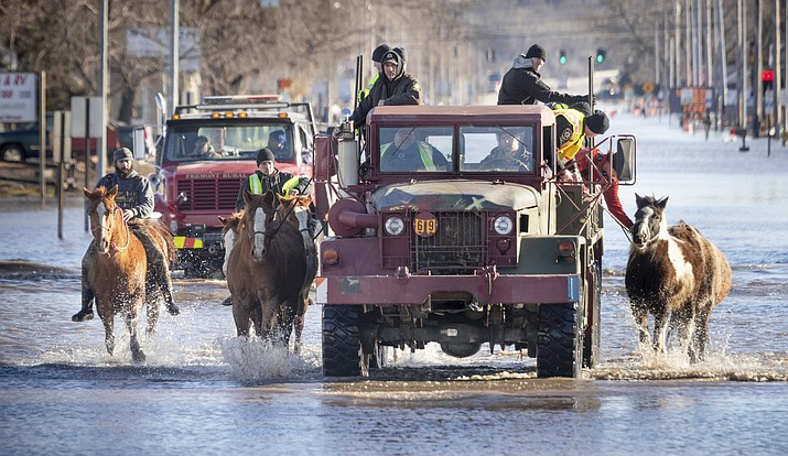 Horses that were being boarded in Inglewood, Neb., are moved through floodwaters to higher ground in Fremont Neb., Friday, March 15, 2019. The flooding followed days of snow and rain — record-setting, in some places — that swept through the West and Midwest. (Kent Sievers/Omaha World-Herald via AP)