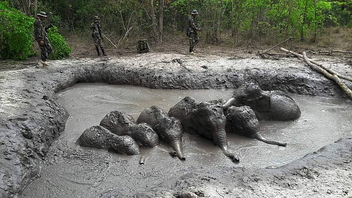 In this photo released and taken by Department of Natural Park, Wildlife, and Plant Conservation on Thursday, March 28, 2019, Thap Lan National Park rangers prepare to extract six baby elephants stuck in a muddy pond at Thap Lan National Park, Nakhon Ratchasima province, northeastern Thailand. The park rangers took five hours to dig out a path to save the six elephant calves after they were found trapped in a muddy pond. (Department of Natural Park, Wildlife, and Plant Conservation via AP)