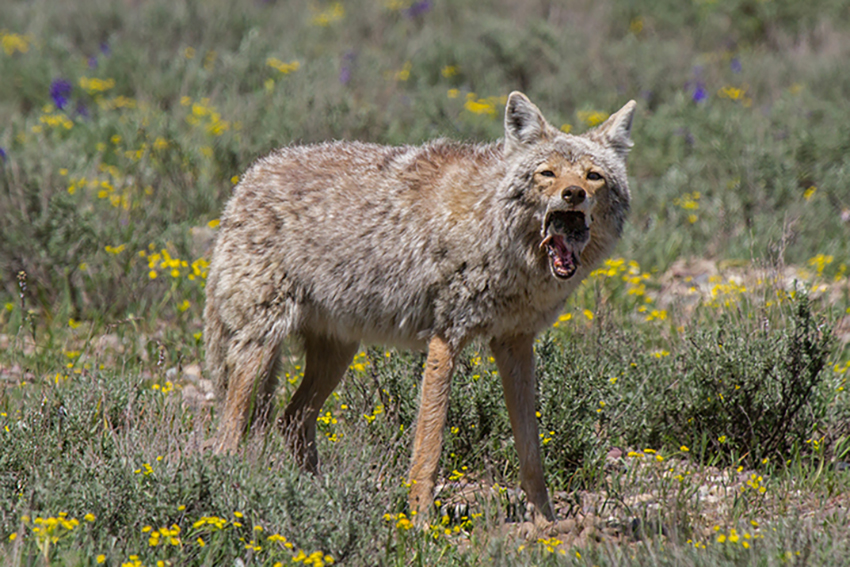 Community View | Mohave Sportsman Club does not participate in 'wildlife killing contests'