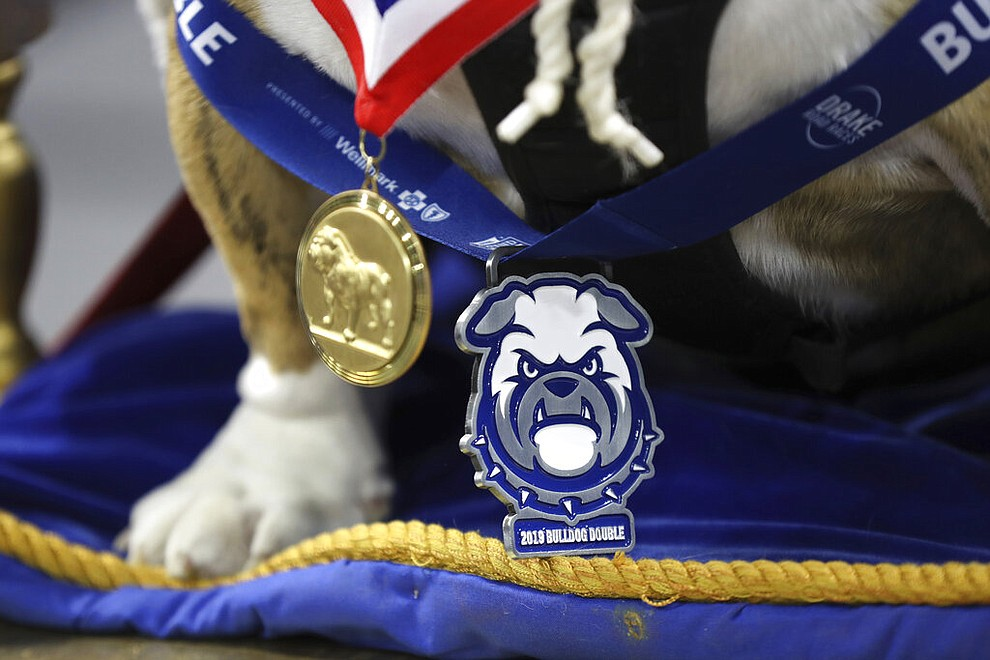 Beau, owned by T.J. and Angela McKenzie, of Urbandale, Iowa, wears medals around his neck as he sits on the throne after being crowned the winner of the 40th annual Drake Relays Beautiful Bulldog Contest, Monday, April 22, 2019, in Des Moines, Iowa. The pageant kicks off the Drake Relays festivities at Drake University, where a bulldog is the mascot. (AP Photo/Charlie Neibergall)