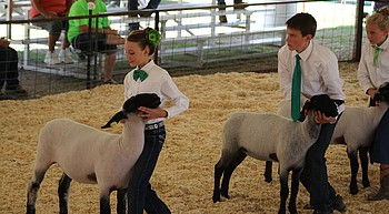 Yavapai County 4H/FFA Expo returns to spring for 70th year photo