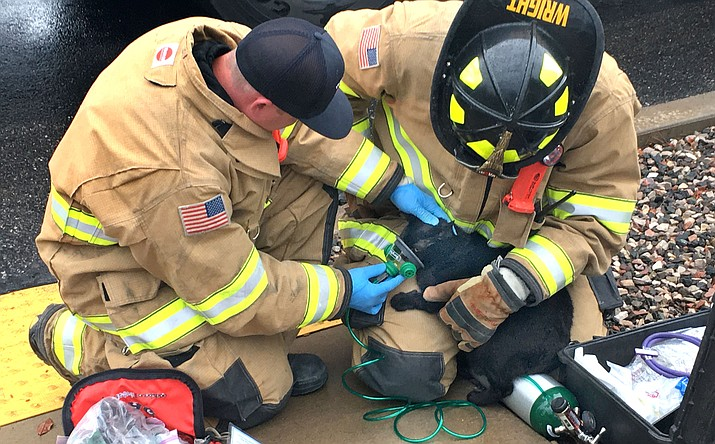 "Two Verde Valley Fire District firefighters give oxygen through a mask to a cat named ""Mooney"" outside an apartment fire off Goddard Road just south of Cottonwood Thursday afternoon. VVN/Vyto Starinskas"
