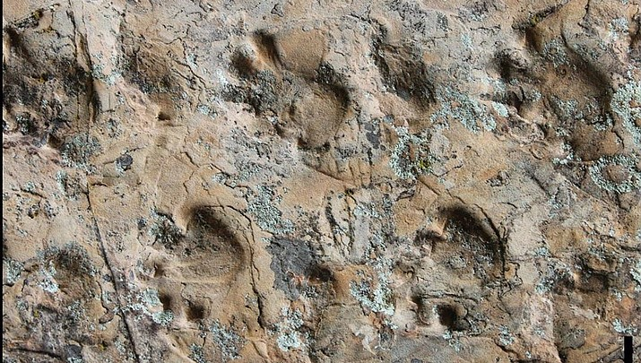 Canyon fossils tell story of life before dinosaurs