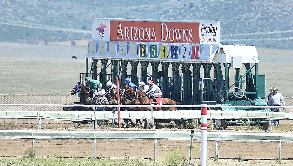 Horses start in the 6 furlong second race at opening day of Arizona Downs Friday, May 24 in Prescott Valley. The racetrack reopens under new ownership after being closed for 10 years. (Les Stukenberg/Courier)