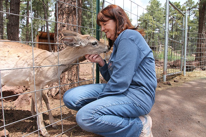 Patricia George nuzzles a deer at the Grand Canyon Deer Farm. The Deer Farm is celebrating 50 years of business this year. (Erin Ford/WGCN)