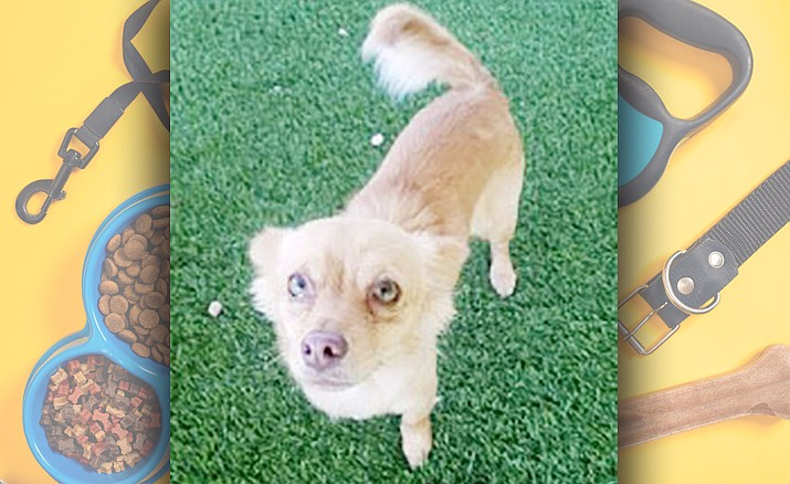 Betty — Chino Valley Animal Shelter