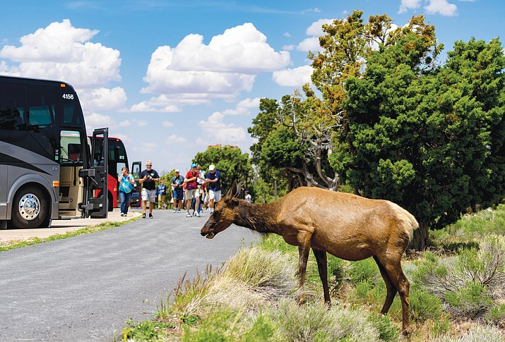NPS is applying herbicide to remove grasses that attract elk in congested areas of Grand Canyon Village. (Stock photo)