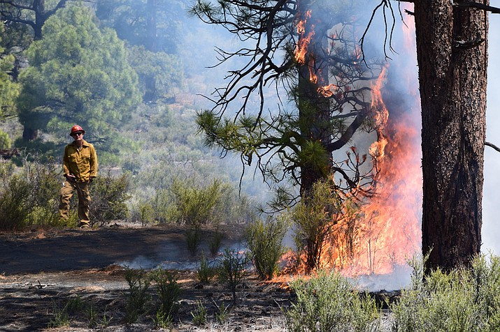 A firefighter watches a tree burn on the Maroon Fire near Leupp May 27. (Photo/Coconino National Forest)