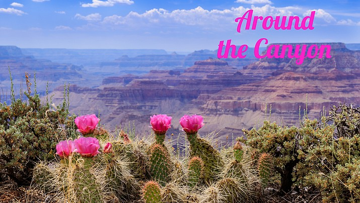 Around the Canyon: Week of June 12