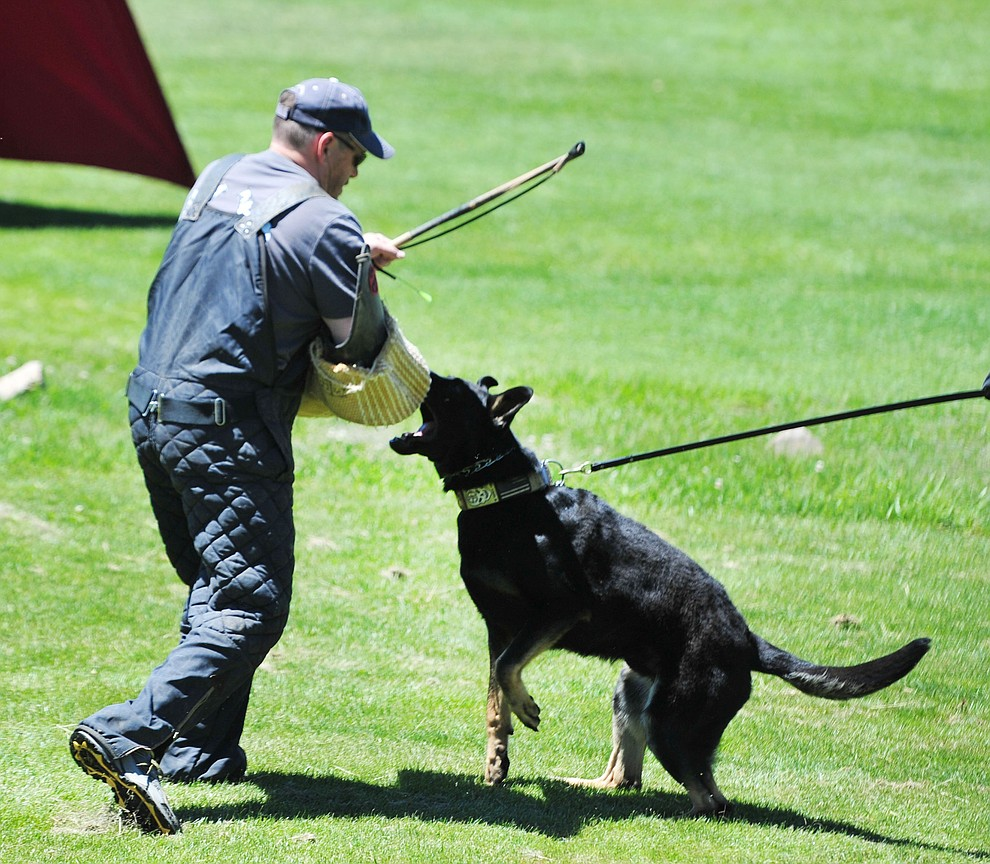 Ray Farber of Farbenholt Dog Training works with Trigger at Woofstock at the Civic Center in Prescott Valley Saturday, June 8, 2019. (Les Stukenberg/Courier)