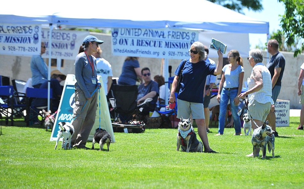 People browse adoption alley looking for rescue dogs at Woofstock at the Civic Center in Prescott Valley Saturday, June 8, 2019. (Les Stukenberg/Courier)