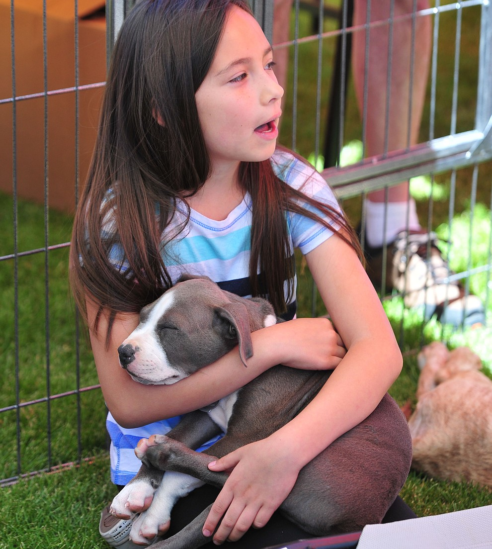 Cienna Mosher holds onto a puppy from Pets Return Home at Woofstock at the Civic Center in Prescott Valley Saturday, June 8, 2019. (Les Stukenberg/Courier)