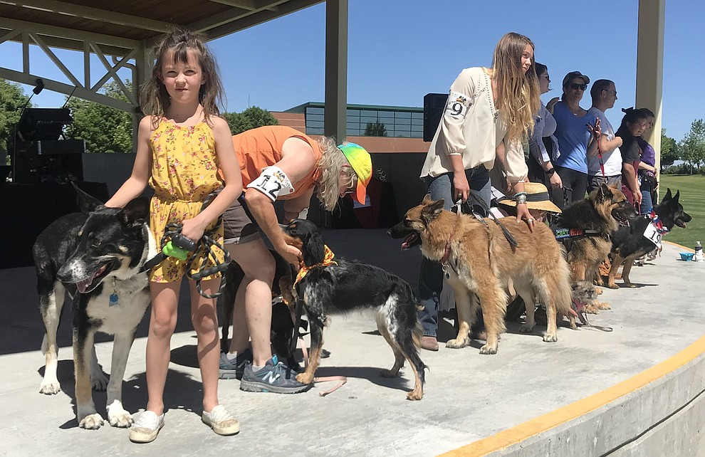 """Contestants enter their dogs in the """"best looking dog contest"""" at Woofstock at the Civic Center in Prescott Valley Saturday, June 8, 2019. (Les Stukenberg/Courier)"""