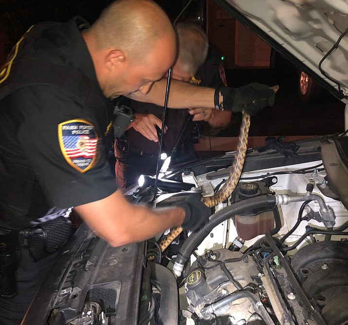 Police in Park Forest, a Chicago suburb, spent 30 minutes removing a snake from the engine of a patrol car Wednesday night. (Park Forest Police)
