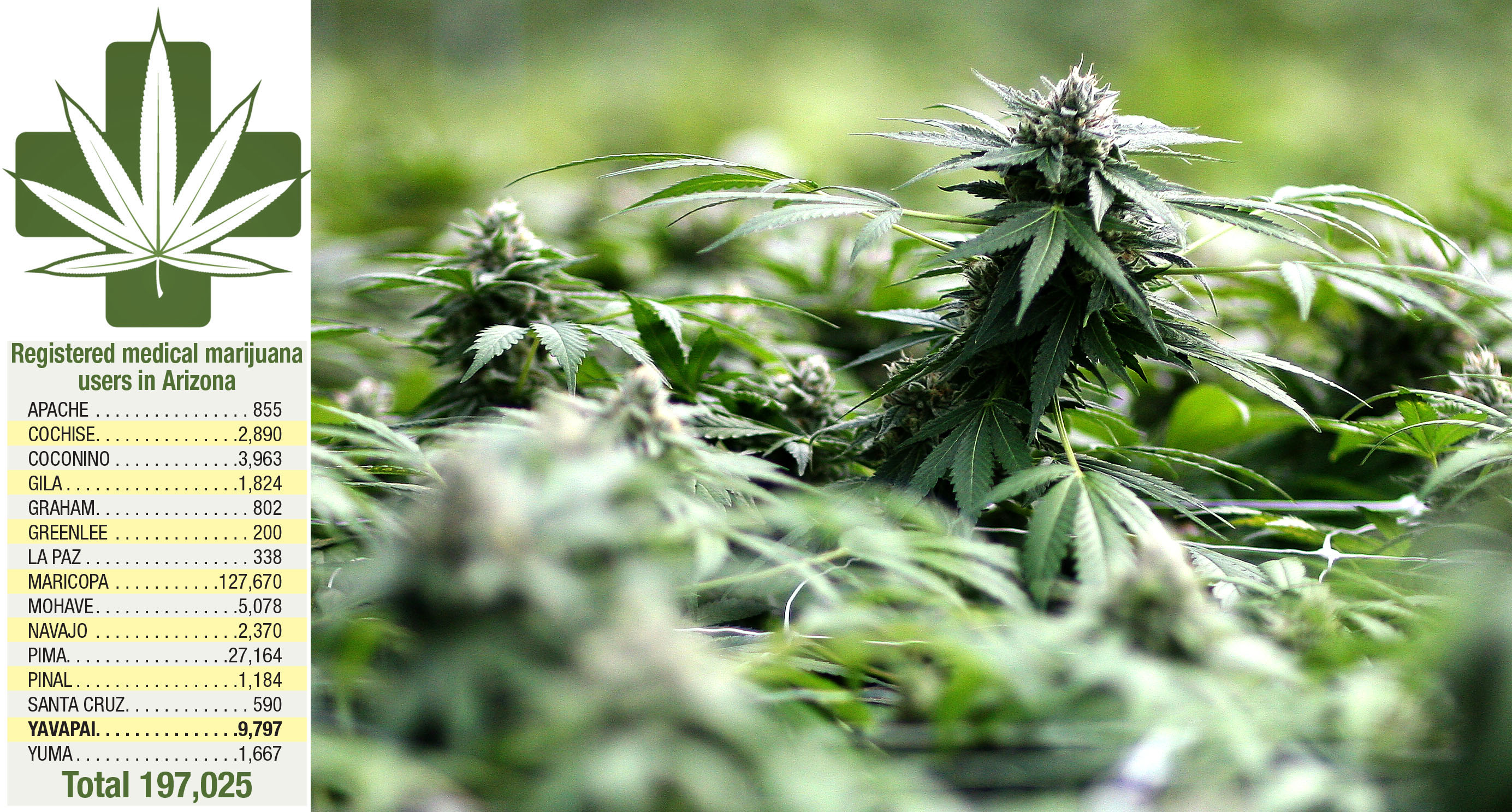 State changes medical marijuana laws to benefit users | The