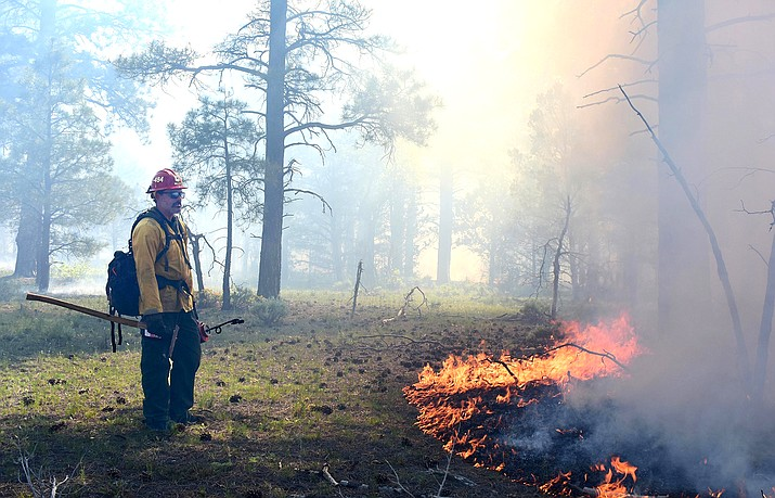 A firefighter ignites vegetation on the Sunflower prescribed burn southwest of Williams. (Kaibab National Forest/Dyan Bone/photo)