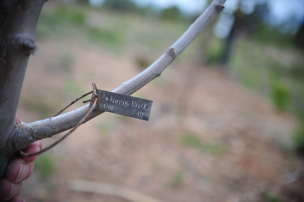 at the Stoic Cider orchard and bottling facility Tuesday, May 29 in Williamson Valley northwest of Prescott. (Les Stukenberg/Courier)
