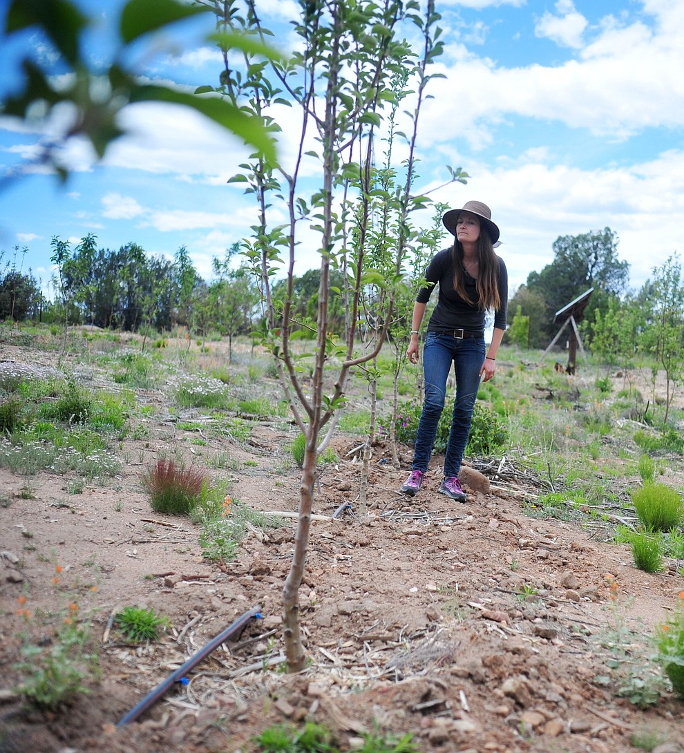 Tierney Routson walks along a row of Arkansas Black trees at the Stoic Cider orchard and bottling facility Tuesday, May 29 in Williamson Valley northwest of Prescott. (Les Stukenberg/Courier)