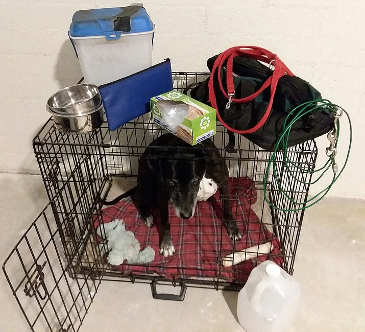 Lacy is prepared for an emergency with her folding crate, medical records, food and water, bowls, collar with ID tags and cleanup bags, all the essentials for living away from home for five days. (Christy Powers/Courtesy)