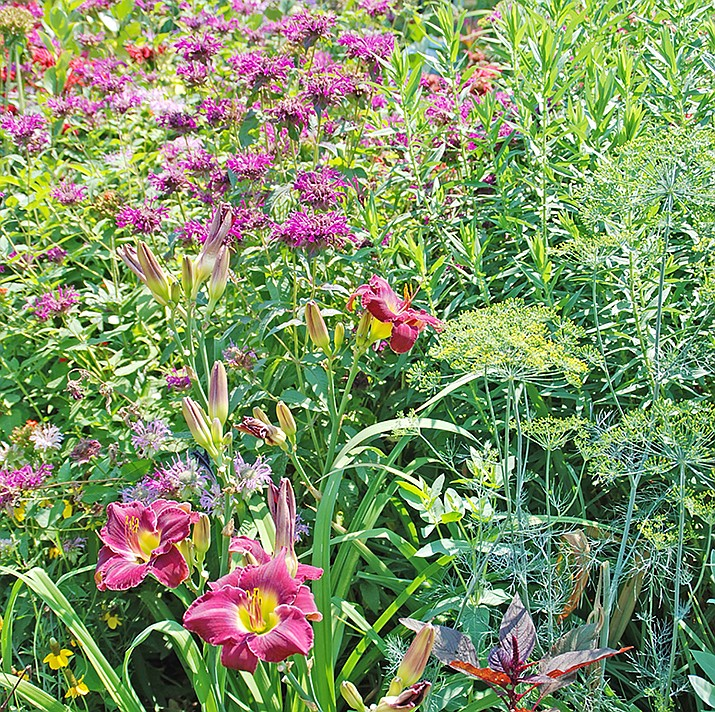 Removing spent flowers on many perennials will encourage additional blooms and keep gardens looking their best. (Melinda Myers, LLC/Courtesy)