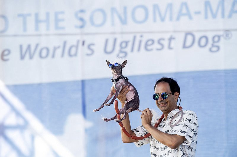 Dane Andrew holds Rascal aloft while competing in the World's Ugliest Dog Contest at the Sonoma-Marin Fair in Petaluma, Calif., Friday, June 21, 2019. Andrew says that although Rascal has taken top honors in eight competitions, he has yet to win Petaluma. (AP Photo/Noah Berger)