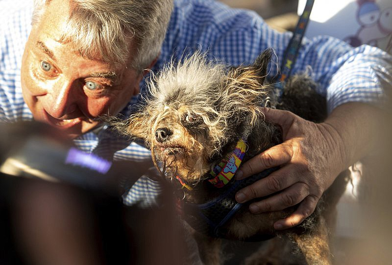 Scamp the Tramp is held after taking top honors in the World's Ugliest Dog Contest at the Sonoma-Marin Fair in Petaluma, Calif., Friday, June 21, 2019. At left is Kerry Sanders, a reporter who served as one of the judges. (AP Photo/Noah Berger)