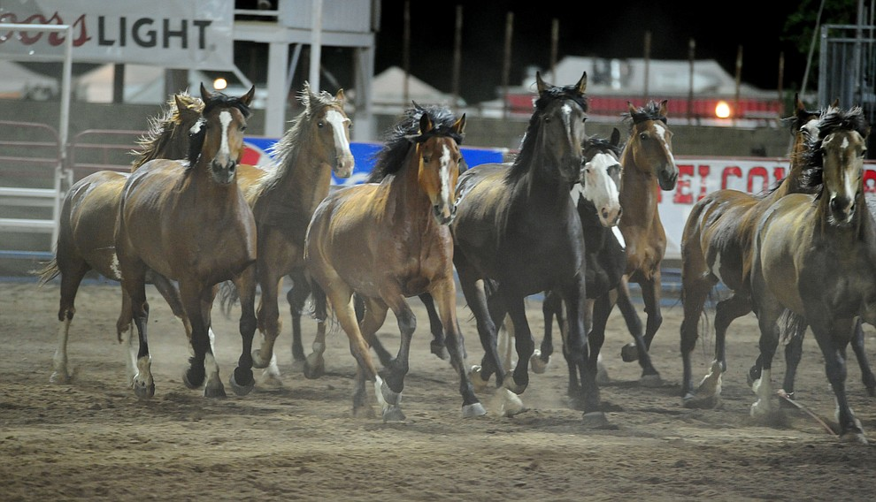 The equine rodeo athletes get a free run following the second performance of the Prescott Frontier Days Rodeo Tuesday July 2, 2019.  (Les Stukenberg/Courier)