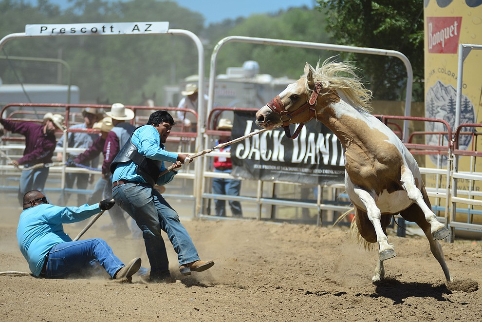 Wild horse racing/Extreme bronc riding during the fourth performance of the Prescott Frontier Days Rodeo Thursday July 4, 2019.  (Les Stukenberg/Courier)