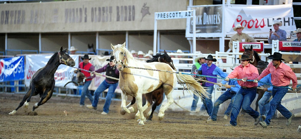 Wild horse racing/extreme bronc riding during the 5th performance of the Prescott Frontier Days Rodeo Friday July 5, 2019.  (Les Stukenberg/Courier)