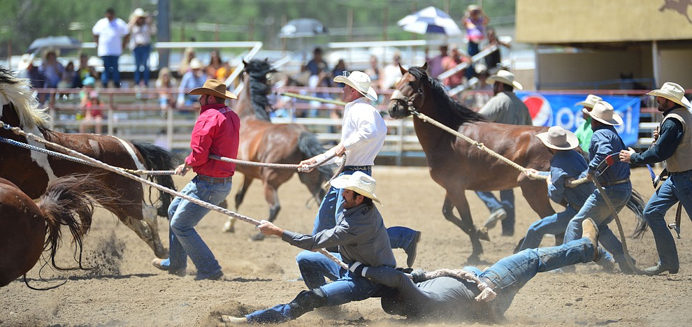 Wild Horse Racing/Extreme Bronc Riding during the 6th performance of the Prescott Frontier Days Rodeo Saturday afternoon July 6, 2019.  (Les Stukenberg/Courier)