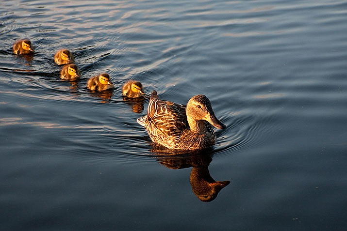 Having your ducks in a row is part of the end of life process. (Adobe Images)