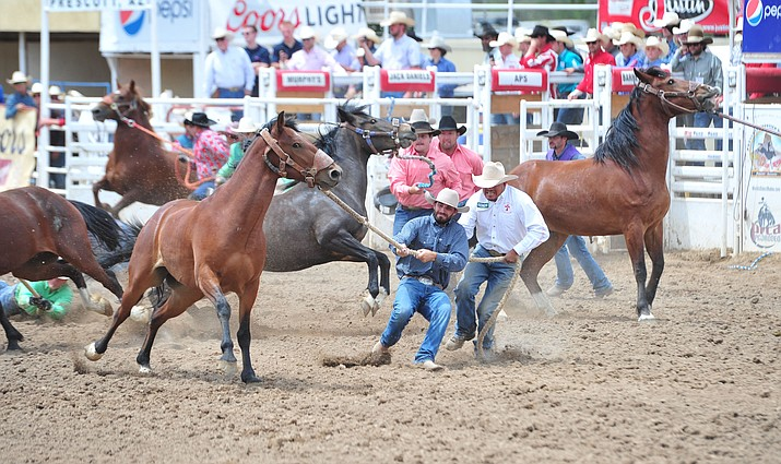 Wild horse racing/Extreme Bronc Riding during the final performance of the Prescott Frontier Days Rodeo Sunday July 7, 2019.  (Les Stukenberg/Courier)