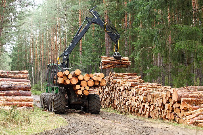 A harvester processes trees and stacks the logs during forest thinning projects that could be given the green light sooner under the proposed rule change. (Stock photo)