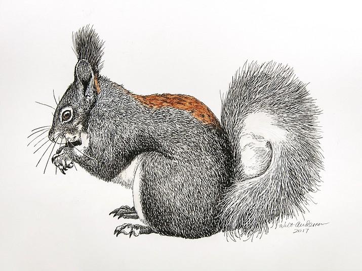 Abert's Squirrel. (Courtesy)