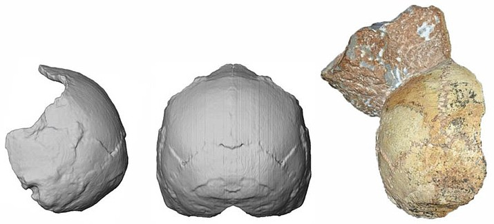 This image provided by the University of Tuebingen in Germany shows the Apidima 1 partial cranium fossil, right, with a piece of rock still attached, and its digital reconstruction from a posterior view, middle, and a side view, left. The rounded shape of the Apidima 1 cranium is a unique feature of modern humans and contrasts sharply with Neanderthals and their ancestors. (Katerina Harvati/University of Tuebingen)