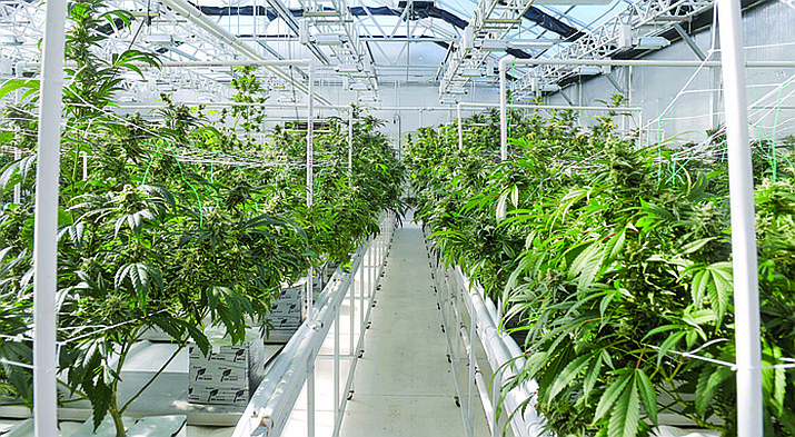 Arizona voters could get the chance next year to legalize recreational use of marijuana. (Courier file photo)