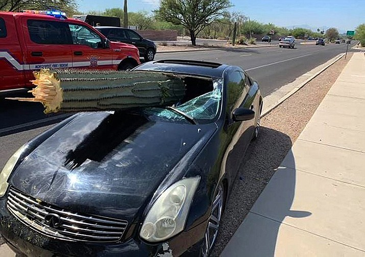 This photo provided by the Northwest Fire District shows where a driver escaped injury when his car's windshield was pierced by the trunk of a saguaro cactus during a wreck Wednesday, July 10, 2019 on the outskirts of Tucson. Pima County Sheriff's Deputy Daniel Jelineo said the black sports car struck the cactus while crossing a median before ending up on the other side of a road and that the cactus ended up slamming into the car's windshield. (Northwest Fire District)