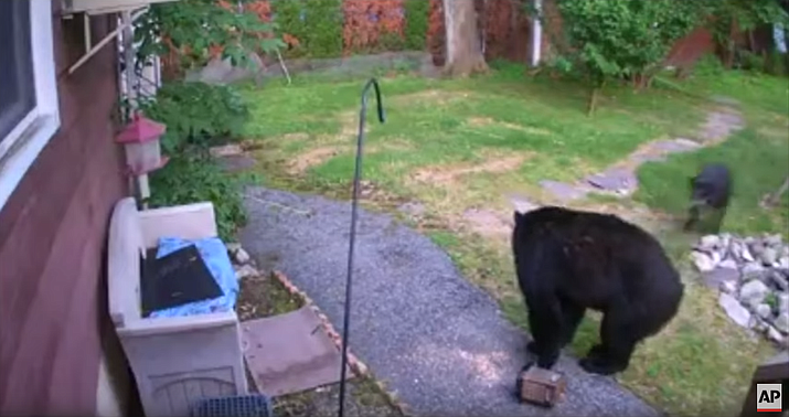 A New Jersey man is promising to give his neighbor's dog a steak for chasing a black bear from his backyard. (Associated Press)