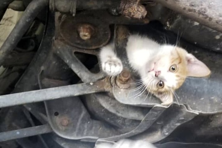 In this Wednesday, July 10, 2019, image provided by D. Scott Bourne, a kitten is trapped in the undercarriage of car at an auto repair shop in Frankfort, Ky. The 9-week-old kitten survived a 30-mile trip before the driver heard a noise and discovered the feline trapped in the frame of the car. The kitten was removed and is healthy. A longtime customer at the shop has volunteered to give her a home. (D. Scott Bourne via AP)