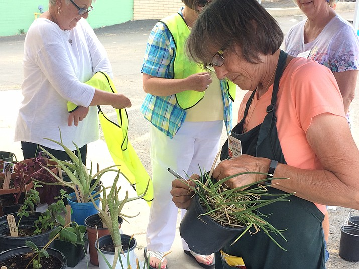 Master Gardener Cathy Michener marks a plant at the 2019 Monsoon Madness Plant and Yard Sale at Prescott Rodeo Grounds Saturday, July 13.