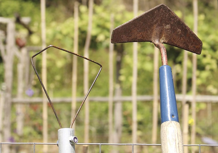 This photo shows garden hoes. The winged weeder, right, and the wire hoe are two of a few styles that are a pleasure to use as their sharp edges run along just beneath the surface of the ground. (Lee Reich via AP)